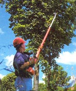 Pruning - tree care